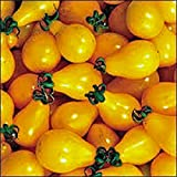 TOMATO,YELLOW PEAR TOMATO SEED, HEIRLOOM, ORGANIC, NON-GMO, 25+ SEEDS, TASTY, GREAT FOR SALADS Photo, new 2018, best price $1.05 review