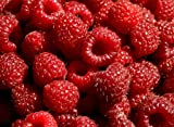 Hilton Raspberry Fruit Plant Seed 100 Stratisfied Berry Plant Seeds Photo, new 2018, best price $1.25 review