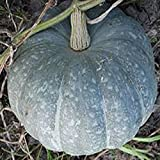 NIKITOVKASeeds - Pumpkin Zimnyaya Sladkaya - 20 Seeds - Organically Grown - NON GMO Photo, new 2019, best price $5.49 review