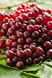 Muscadine Grape Plant - RazzMatazz! Rare variety with delicious flavor and 5x as many clusters as other grapes. Photo, new 2018, best price  review