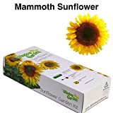 Garden Starter Kit (Mammoth Sunflower) – Grow sun flower seed in a mini greenhouse, then plant a beautiful patch of Sunflowers in your backyard. It's easy, fun, and a great gift for adults and kids. Photo, new 2018, best price $9.99 review