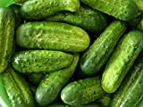 David's Garden Seeds Cucumber Pickling National SL2450 (Green) 50 Organic Seeds Photo, new 2018, best price $8.45 review