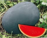 Dwqgroup Heirloom Gray Skin Big Long Red Sweet Seedless Watermelon Organic Seed, Professional Pack, 50 Seeds / Pack, 100% True Seed Photo, new 2018, best price $18.29 review