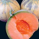 Heirloom French CHARENTAIS MELON Cantaloupe✽75 SEEDS✽Sweet✽FLAT RATE COMBINE S/H Photo, new 2018, best price $8.50 review