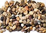 Supply Guru SG2133 River Rocks, Pebbles, Outdoor Decorative Stones, Natural Gravel, For Aquariums, Landscaping, Vase Fillers, Succulent, Tillandsia, Cactus pot, Terrarium Plants, 2 LB. (32-Oz). Photo, new 2018, best price $16.84 review