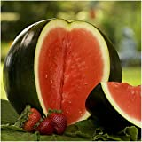Package of 100 Seeds, Sugar Baby Watermelon (Citrullus lanatus) Seeds by Seed Needs Photo, new 2018, best price $3.65 review