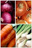 Organic Short Day Onion 2 Pack Onion Seeds 800 Seeds UPC 656793277213 Red Cipollini Onion, Yellow Sweet Spanish, Evergreen Bunching Photo, new 2018, best price $5.99 review