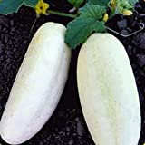 Everwilde Farms - 100 White Wonder Cucumber Seeds - Gold Vault Jumbo Seed Packet Photo, new 2019, best price $2.50 review