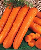200pcs Natural Carrot Seeds, Sara Mate Carrot Vegetable, for Spring Garden Planting Photo, new 2018, best price $6.99 review