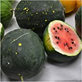 Package of 20 Seeds, Watermelon Van Doren Moon & Stars (Citrullus lanatus) Non-GMO Seeds By Seed Needs Photo, new 2019, best price $3.65 review