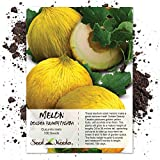 Seed Needs, Golden Beauty Casaba Melon (Cucumis melo) 100 Seeds Non-GMO Photo, new 2019, best price $3.85 review