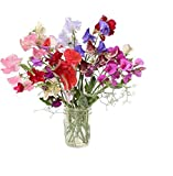David's Garden Seeds Flower Sweet Pea Royal Mix SL1319 (Multi) 50 Non-GMO, Heirloom Seeds Photo, new 2019, best price $6.95 review
