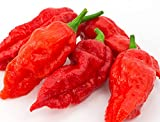 Ghost Pepper Seeds- 25+