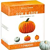 Nature's Blossom Pumpkin Kit - Grow 3 Pumpkins from Seed Photo, new 2019, best price $24.99 review