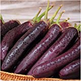 Package of 100 Seeds, Long Purple Eggplant (Solanum melongena) Non-GMO Seeds By Seed Needs) Photo, new 2018, best price $3.50 review