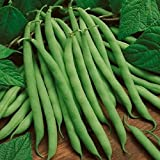 David's Garden Seeds Bean Bush Blue Lake 274 RSL3085 (Green) 100 Heirloom Seeds Photo, new 2018, best price $8.65 review