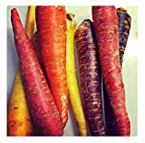 David's Garden Seeds Carrot Rainbow Blend SL2279 (Multi) 500 Non-GMO, Open Pollinated Seeds Photo, new 2019, best price $6.95 review