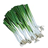 Burpee Parade Scallion Onion Seeds 1500 seeds Photo, new 2019, best price $7.69 review