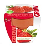 Strawberry Mini Grow Pot Kit Plant Seeds Plant Outdoor & Indoor Photo, new 2019, best price $8.99 review