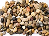 Supply Guru SG2133 River Rocks, Pebbles, Outdoor Decorative Stones, Natural Gravel, For Aquariums, Landscaping, Vase Fillers, Succulent, Tillandsia, Cactus pot, Terrarium Plants, 2 LB. (32-Oz). Photo, new 2020, best price $8.79 review