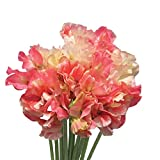 Burpee Incense Peach Shades Sweet Pea Seeds 40 seeds Photo, new 2019, best price $8.49 review