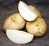 SEED POTATOES - 5 lb Kennebec * Organic Grown * Non GMO * Virus & Chemical Free * Ready for Spring Planting * Photo, new 2018, best price $12.50 review