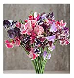 David's Garden Seeds Flower Sweet Pea Spencer Ripple Formula Mix SL1807 (Multi) 50 Non-GMO, Open Pollinated Seeds Photo, new 2019, best price $7.95 review