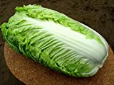 Chinesse Cabbage seeds Hilton Heirloom Vegetable Seeds early Photo, new 2018, best price $1.99 review