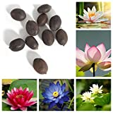 Trenton 10Pcs Water Lotus Flower Plant Bowl Pond Bonsai Seeds for Home Garden Yard Decor (Mixed Color) Photo, new 2019, best price $2.39 review