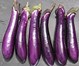 David's Garden Seeds Eggplant Purple Shine 9162 (Purple) 50 Non-GMO, Hybrid Seeds Photo, new 2019, best price $7.95 review