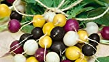 HEIRLOOM NON GMO Halloween Radish Mix 500 Seeds Photo, new 2018, best price $1.99 review