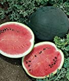 Jayseeds™ Organic Non-GMO Sugar Baby Watermelon Seeds 120 Seeds UPC 643451295559 + 1 Free Plant Marker Photo, new 2018, best price $5.99 review