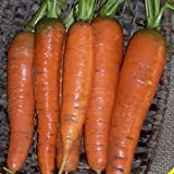 Everwilde Farms - 2000 Tendersweet Carrot Seeds - Gold Vault Jumbo Seed Packet Photo, new 2018, best price $2.50 review