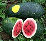 MOON & STARS Heirloom Watermelon Seeds Photo, new 2018, best price $8.49 review