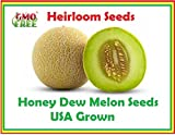 Honey Dew Green Melon, Heirloom Melon Seeds, Fruit Seeds 105 seeds. Honey Dew Melon Seeds Photo, new 2018, best price $7.95 review