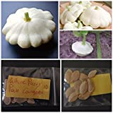 White Patty Pan Courgette ~10 Top Quality Seeds - Amazing Variety! Photo, new 2018, best price $10.00 review