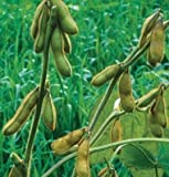 David's Garden Seeds Bean Soy Envy OS105 (Green) 100 Open Pollinated Seeds Photo, new 2018, best price $8.45 review