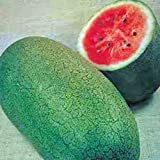 WATERMELON, CHARLESTON GREY, HEIRLOOM, ORGANIC 100 SEEDS, LARGE & SUPER SWEET Photo, new 2019, best price $1.79 review
