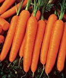 165+ Organic Scarlet Nantes Carrot Seeds - Non GMO - DH Seeds - Includes Free Gift - UPC0787639607984 Photo, new 2019, best price $5.29 review