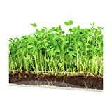 "Microgreen Organic Pea Shoot 3 Pack Refill–Pre-measured Soil + Seed, Use with Window Garden Multi-Use 15"" x 6"" Planter Tray. Easy and Convenient, Enough to Sprout 3 Crops of Superfood. Photo, new 2019, best price $12.99 review"