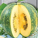 NIKITOVKASeeds - Pumpkin Hulless Dana - 20 Seeds - Organically Grown - NON GMO Photo, new 2020, best price $5.49 review