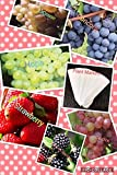Bulk 4 Grape Vine Seeds Survival Seeds 440 Seeds Upc 650327337435 + 6 Plant Markers Strawberry Seeds Blackberry Seeds (PLUS BONUS 2PACK) Photo, new 2018, best price $6.39 review