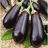 Eggplant seeds Diamond Heirloom Vegetable Seed from Ukraine Photo, new 2018, best price $1.99 review