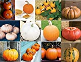 David's Garden Seeds Collection Set Pumpkin Seed QP9655 (Multi) 12 Varieties 200+ Seeds (Open Pollinated, Organic) Photo, new 2018, best price $33.95 review