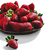 Organic Surecrop Strawberry 315 Seeds UPC 600188194753 + 1 Free Plant Marker - Low-Maintenance Photo, new 2019, best price $4.99 review