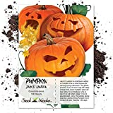 Package of 100 Seeds, Jack O' Lantern Pumpkin (Cucurbita pepo) Non-GMO Seeds by Seed Needs Photo, new 2019, best price $3.85 review