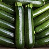 Courgette - Midnight - 15 Seeds Photo, new 2018, best price $2.03 review