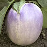 Everwilde Farms - 100 Rosa Bianica Eggplant Seeds - Gold Vault Jumbo Seed Packet Photo, new 2018, best price $2.50 review