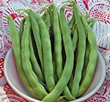 Bean, Pole Kentucky Wonder Seeds, Organic, NON-GMO, 20+ seeds per package,Hearty Healthy Green Been Photo, new 2018, best price $1.79 review