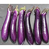 Purple Shine Hybrid Eggplant Seeds - a popular Chinese type eggplant variety.!!(10 - Seeds) Photo, new 2018, best price $2.99 review
